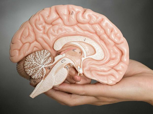 อาหารบำรุงสมอง